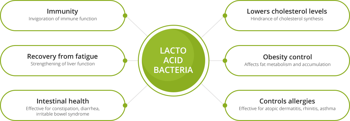 Effects of Lacto acid bacteria